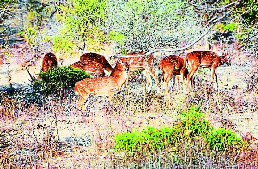 वन्य-प्राणियों के अंगों के संबंध में फैली भ्रांतियों से बचें – आलोक कुमार