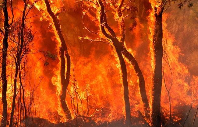 जल रहे हैं देश के जंगल