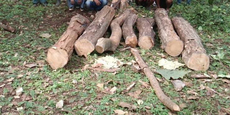 सिवनीः पेंच के जंगल से सागौन काटते रंगे हाथ चार आरोपित गिरफ्तार