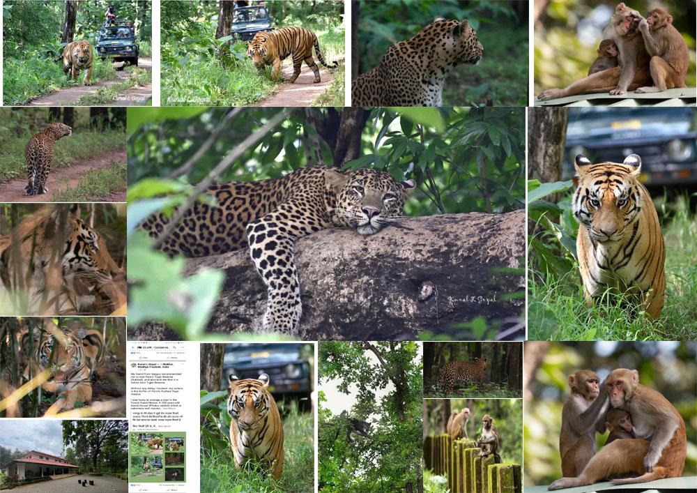 M.P. Pench park : चेन्नई के कुणाल एल गोयल ने वन्यजीवों की अठखेलिया और प्राकृतिक सौदर्य को करीब से जाना , सोशल मीडिया में साझा की जानकारी