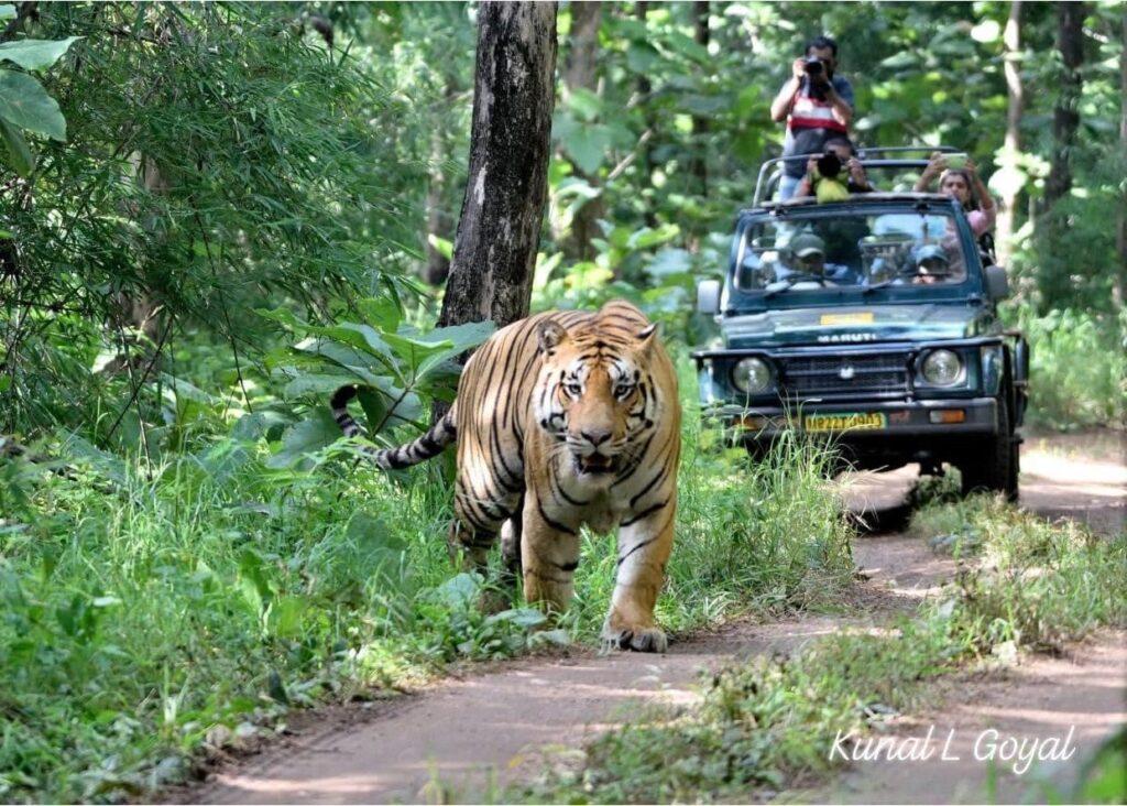 M.P.Tourism: मध्यप्रदेश वन्य-जीव और जैव-विविधता पर्यटन की है संगम स्थली